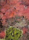 Lichen green on red rock texture nature — Stock Photo