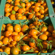 Orange tangerine fruits in harvest in a row baskets - Stock Photo
