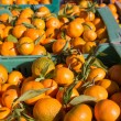 Orange tangerine fruits in harvest in a row baskets — Stockfoto