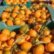 Orange tangerine fruits in harvest in a row baskets — Stock Photo