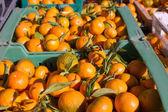 Portakal mandalina meyve hasat içinde bir satır sepetleri — Stok fotoğraf