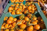 оранжевый мандарин фрукты урожай в строку корзины — Стоковое фото