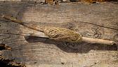 Bobine traditionnelle sur une branche d'arbre bâton — Photo