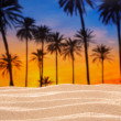 Tropical palm tree sunset sky on sand dune beach — Foto Stock