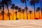 Tropical palm tree sunset sky on sand dune beach — Stock Photo