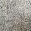 Stock Photo: Bull white hair closeup macro detail