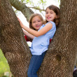 Children girls playing climbing to a tree park — Stock Photo