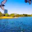 Stock Photo: Houston Mc govern lake with spring water