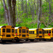 American typical school buses row in a forest outdoor - Stok fotoğraf