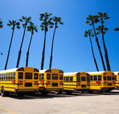 School bus row with California palm trees photo mount — Stock Photo