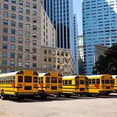 School bus row at San Francisco market photo mount — Stock Photo