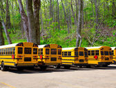 American typical school buses row in a forest outdoor — Stock Photo