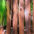 Stock Photo: Tropical wooden trunk wll and palm tree