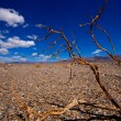 Stock Photo: Death Valley National Park Californidried branches