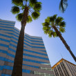 Stock Photo: LDowntown Los Angeles Pershing Square palm tress