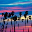 California palm trees sunset with colorful sky — Stock Photo #32016535