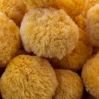 Sea  sponge detail in round shape — Stock Photo