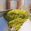 ストック写真: Chardonnay corkscrew crusher destemmer in winemaking