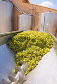 Chardonnay corkscrew crusher destemmer in winemaking — Foto de Stock