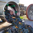 Stock Photo: Corkscrew crusher destemmer winemaking with grapes