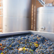 Stock Photo: Cabernet sauvignon vinemaking with grapes and tanks