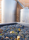 Cabernet sauvignon vinemaking with grapes and tanks — Stock Photo