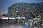 Corkscrew crusher destemmer winemaking with grapes — Stock Photo
