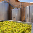 Chardonnay winemaking with grapes and tanks — Photo #34411049