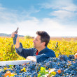 Stock Photo: Mediterranevineyard farmer harvest cabernet sauvignon