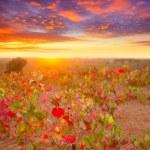 Autumn golden red vineyards sunset in Utiel Requena — Stock Photo #34417145
