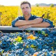 Mediterranean vineyard farmer harvest cabernet sauvignon — Stock Photo #34418993