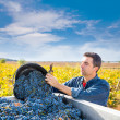 Mediterranean vineyard farmer harvest cabernet sauvignon — Stock Photo