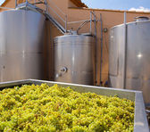 Chardonnay winemaking with grapes and tanks — ストック写真