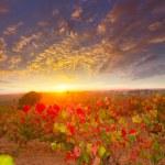 Autumn golden red vineyards sunset in Utiel Requena — Stock Photo #34421385