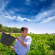 图库照片: Chardonnay harvesting with harvester farmer winemaker