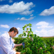 Stock Photo: Winemaker oenologist checking Tempranillo wine grapes