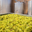 Foto Stock: Chardonnay winemaking with grapes and tanks