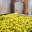 图库照片: Chardonnay winemaking with grapes and tanks