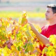 Mediterranean vineyard farmer checking grape leaves — Stock Photo