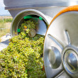 Stockfoto: Chardonnay corkscrew crusher destemmer in winemaking