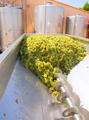 Chardonnay corkscrew crusher destemmer in winemaking — Стоковое фото