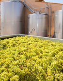 Chardonnay winemaking with grapes and tanks — Photo