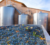 Cabernet sauvignon winemaking with grapes and tanks — Stock Photo
