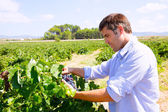 Winemaker oenologist checking bobal wine grapes — Stock Photo
