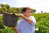 Chardonnay harvesting with harvester farmer winemaker — Stock Photo