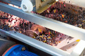 Corkscrew crusher destemmer vinemaking with grapes — Stock Photo