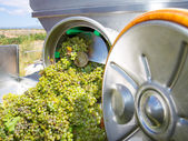 Chardonnay corkscrew crusher destemmer in winemaking — Stock Photo