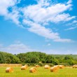 Hay round bale greenfield cereal plants in sunny day — Stock Photo