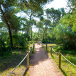 Mediterranan pine forest track in Menorca Cala Macarella — Stock Photo