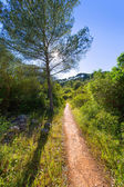 Menorca mediterranean track in es Mitjorn Gran — Foto Stock